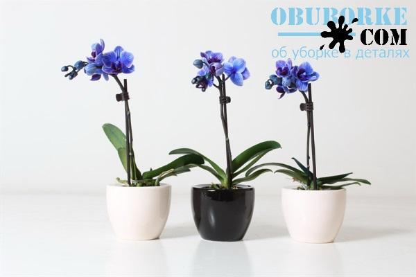 Пересадка орхідеї фаленопсис в домашніх умовах  7f3e9e3871834