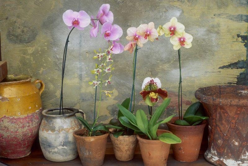 Догляд за орхідеєю в домашніх умовах — тропічна красуня на підвіконні e75baecc30800