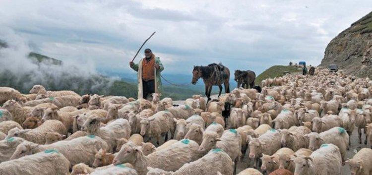 Пастух ебет вас