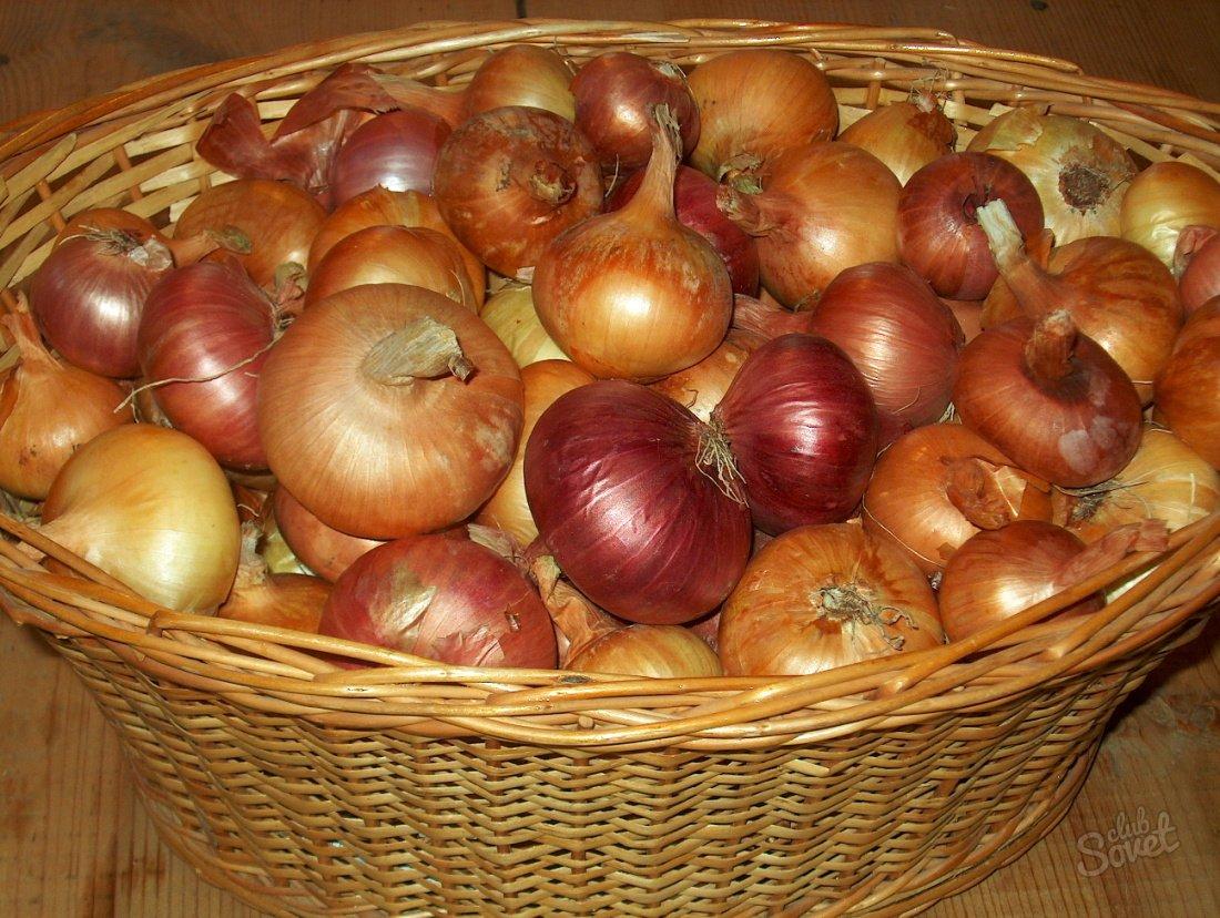 Как подготовить лук к хранению в домашних условиях Сад и огород 13