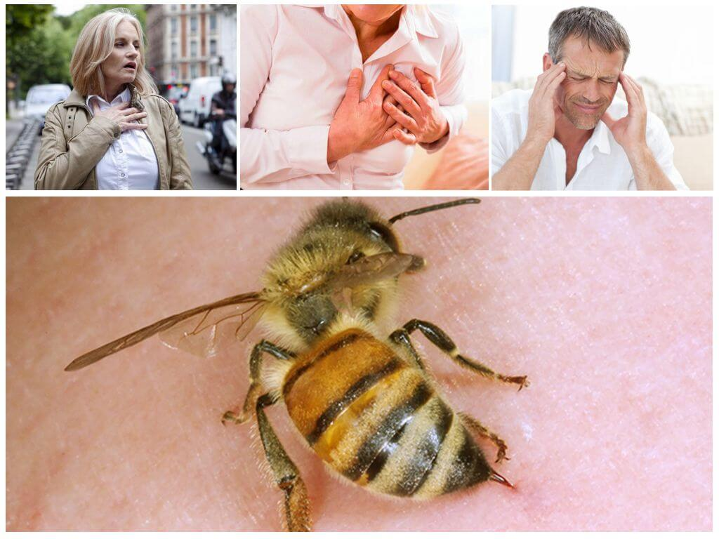 Ни для кого не является секретом, что пчела — олицетворяет трудолюбие, расторопность, хлопотливость, усердие, бережливость и экономию.